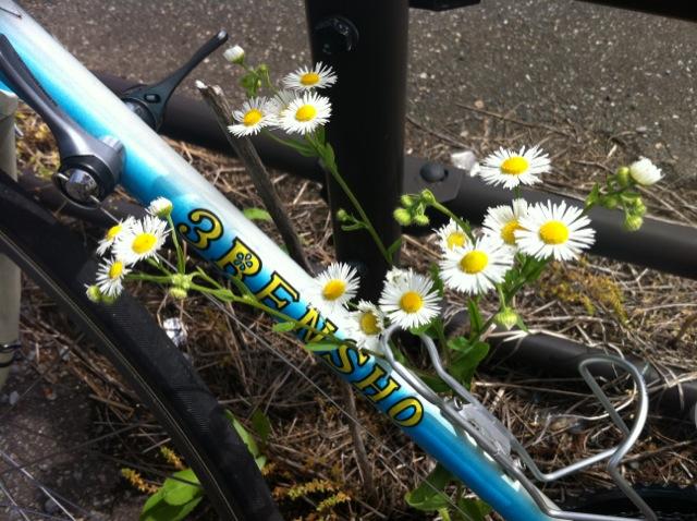 道端のお花を撮ってみましたぁ